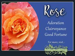 rose meaning u0026 symbolism june birth flower flower meanings