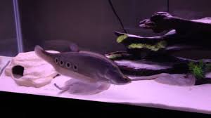 Aquarium Decoration Ideas Freshwater Beautiful Interior Fresh Water Sand Tank Ideas That Can Be Nice