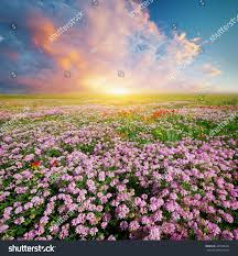 Beautiful Landscapes Spring Flowers Meadow Beautiful Landscapes Stock Photo 440936461