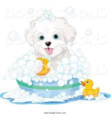 bichon frise cute doggy clipart of a cute bichon frise maltese puppy dog bathing