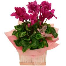 Flowers For Mum - mothers day