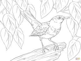 blackbird male for coloring page animal beautiful blackbird