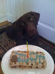 birthday cakes for dogs dog birthday cake