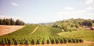 three tree farms wholesale trees