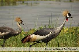 murchison falls 3 day falls and game safari red chilli tours and