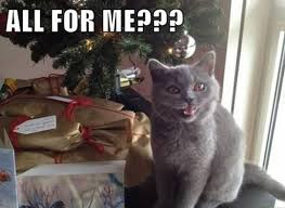 Cat Christmas Tree Meme - so my cat found the christmas tree that we hid on the table he