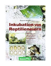 Dr Ruch Bad Kissingen Green Iguana Grüner Leguan Tierärzte Für Reptilien