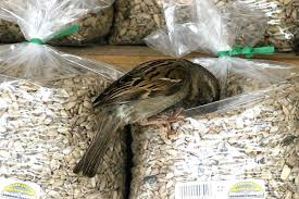 tips for buying birdseed locally and online
