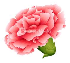 illustration of a fresh carnation pink flower on a white