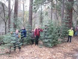 christmas tree for sale fork scout christmas tree sale news online