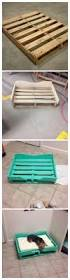 Wooden Designer Shelf Pet Society by Best 25 Dog Stuff Ideas On Pinterest Puppy Care Dog Having