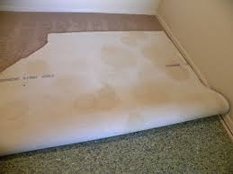 carpet contaminants how to remove pet urine from carpet riverside ca