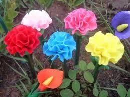 carnation flower garden flower pictures youtube