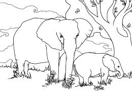 alpha male african elephant colouring colouring tube