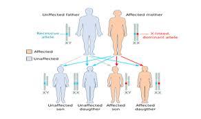 Chromosome Color Blindness Linked Inheritance Ck 12 Foundation