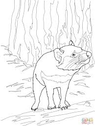 australian tasmanian devil coloring page free printable coloring