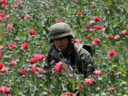 us mexico heroin eradication efforts problems business insider