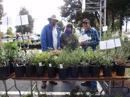 native plant propagation 2016 native plant sale cnps slo