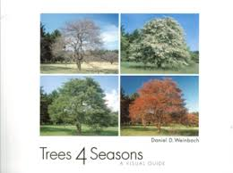 landscape architects guide to deciduous trees trees 4 seasons