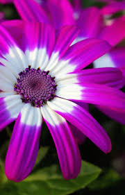 1033 best flowers images on pinterest flowers nature and plants