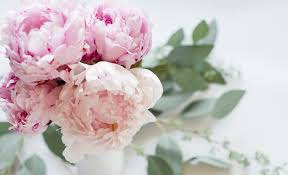 where to buy peonies pink peonies are in bloom this season and i am truly loving it1