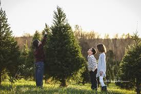 christmas tree farms in northern virginia christmas lights