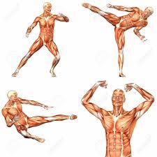 Google Body Anatomy Pin By Marcus Murrell On Anatomy Reference Pinterest Human