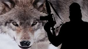 lone wolf jihadists the counter jihad report