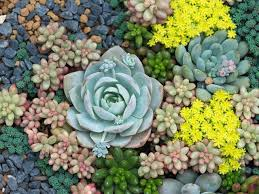 Low Light Succulents by How To Grow Succulents Saga