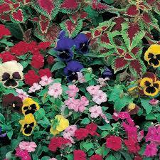 roll out flower garden shady garden garden roll out roll out flowers walter