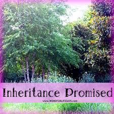 inheritance promised u201d sunday lesson ezekiel 47 13 23