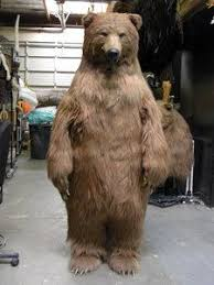 realistic costumes realistic grizzly costume search realistic