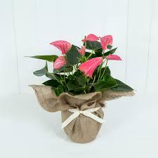 online florists flower delivery online florist send flowers online moonpig