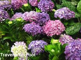 ornamental plants in quezon city traveler on foot