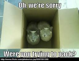 Moving Pictures Meme - cats not the most helpful of moving buddies re pinned by www