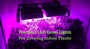 Grow Lights For Plants The Best Led Grow Lights For Growing Indoor Plants Updated Black