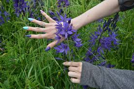 native english plants orww native plants camas color variations western oregon 2015
