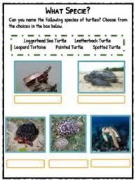 turtle facts worksheets u0026 habitat species information for kids