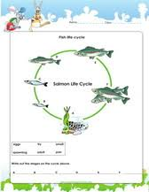 3rd grade science activity worksheets pdf
