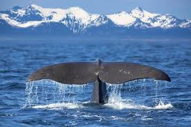 Whale Watches Cape Cod - 8 best places for whale watching