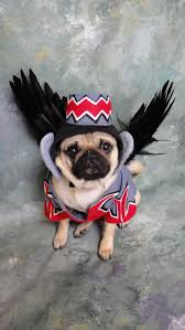 Flying Monkey Costume Flying Monkey Dog Costume Okay This Is Just Beyond Cute I Want