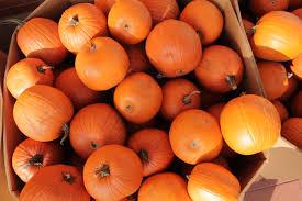 file halloween pumpkins img 2191 jpg wikimedia commons