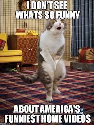 Funny Memes Videos - gotta go cat meme imgflip