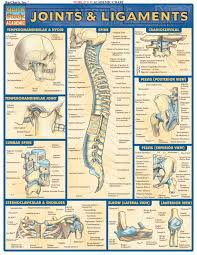 Human Anatomy And Physiology Books 41 Best Anatomy Physiology Images On Pinterest Human Anatomy