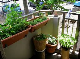 Patio Herb Garden Ideas Quality Soil Herb Garden Ideas For A Balcony 762 Hostelgarden Net