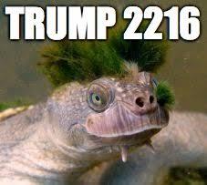Turtle Memes - donald trump turtle memes imgflip