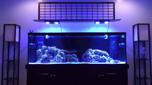 Reef Aquascape Designs How To Aquascape A Reef Tank Youtube