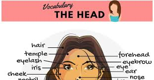 hair style esl parts of the face names human head vocabulary 7 e s l