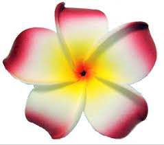 plumeria flowers plumeria flower hair clip