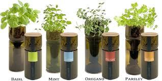 indoor herb garden kits to grow herbs indoors hgtv culinary herb garden kit hydraz club